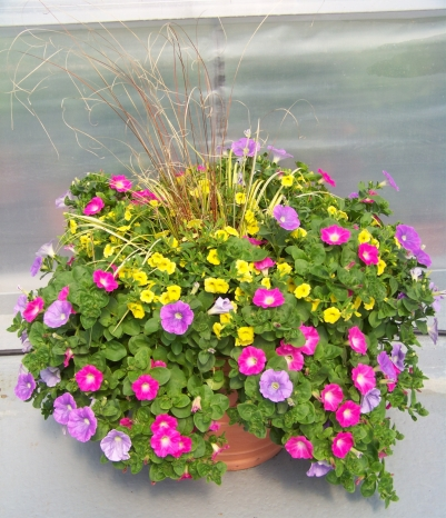 Bepflanzte Blumenkübel blumenkbel bepflanzen das bild wird geladen with blumenkbel